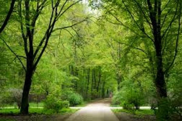 Тернополяни просять зберегти зелену зону на вулиці Живова