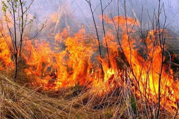 На Київщині горять сотні квадратних метрів сухої трави (Відео)