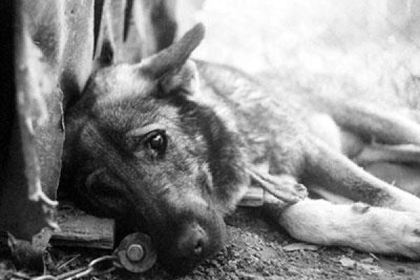 Собака, яку прив'язали в кущах та покинули власники, знайшла прихисток у гвардійців