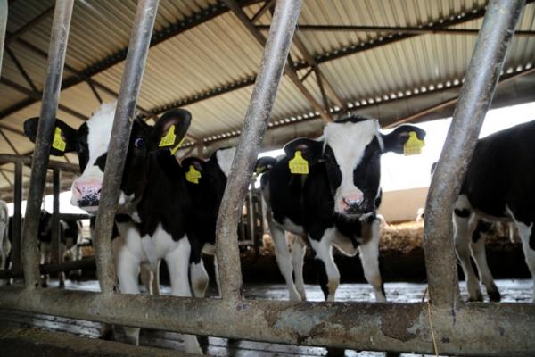 Аграрна Тернопільщина: В Осівцях зразкова ферма (Фото)