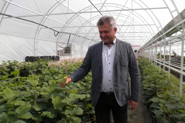Аграрна Тернопільщина: Урожай фруктів зросте