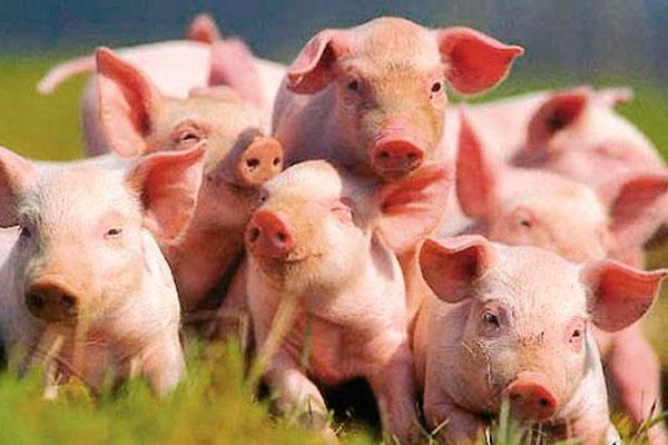 На Тернопільщині зафіксовано випадок чуми, яка атакує тварин