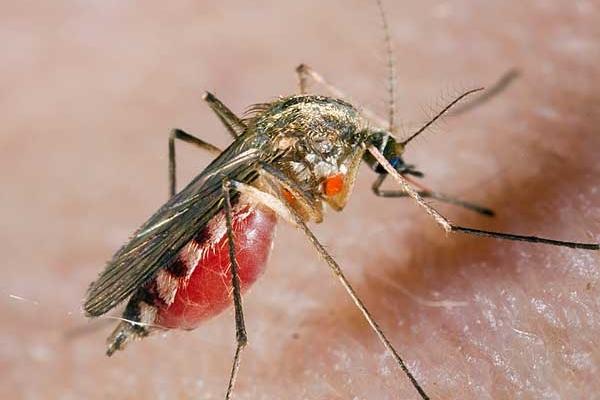 Спорт, пиво, одяг: учені розповіли, чому комарі кусають деяких людей частіше за інших
