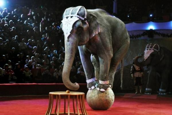 Тернопільські активісти хочуть заборонити пересувні цирки у місті