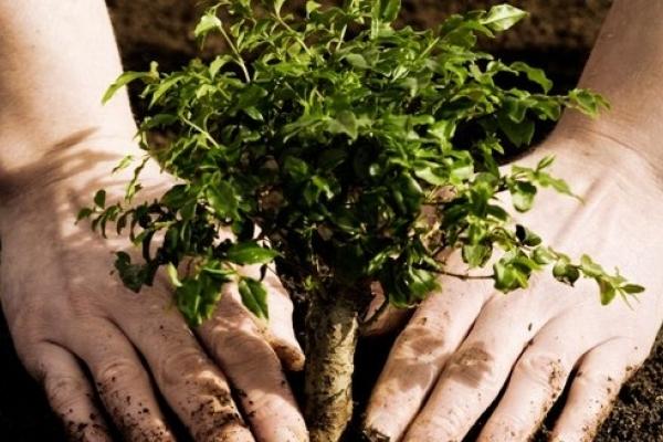 «Схема озеленення міста» представлена у Тернопільльській міській раді