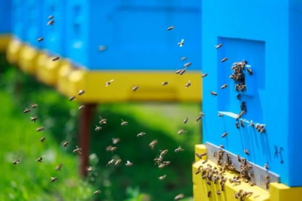 На Тернопільщині оштрафовано підприємця, по вині якого загинуло близько 380 бджолиних сімей