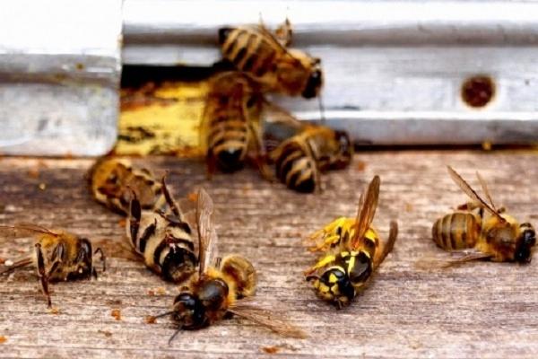 На Тернопільщині розслідують факти масової загибелі бджіл