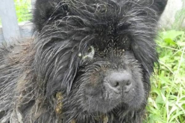 На Тернопільщині власник собаки, який є священиком, залишив тварину гнити заживо