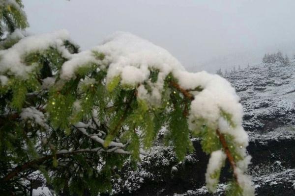 Сьогодні вночі в Карпатах випав рясний сніг (Фото)