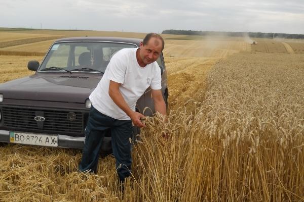 Аграрна Тернопільщина: Жнива-2018 на порозі