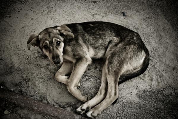 У Тернополі жорстоко вбили собаку (Відео)