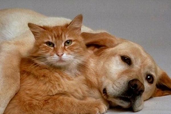 У Тернополі безкоштовно вакцинуватимуть собак та котів від сказу