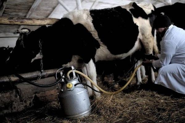За доїльні апарати на Тернопільщині отримують державні компенсації