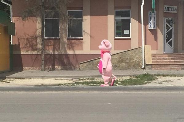 Збаражем гуляла рожева свинка на двох ногах (Фото)