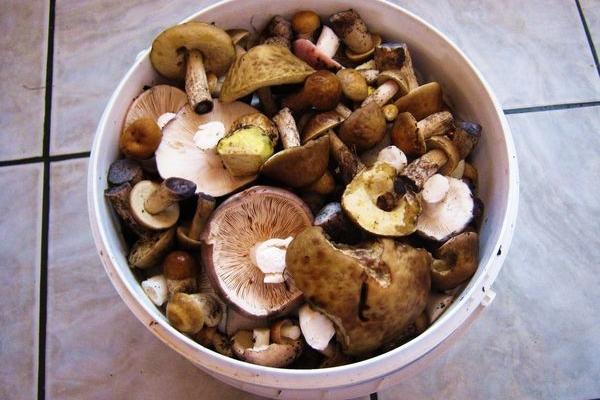 Рецепт сухого маринування грибів від автора