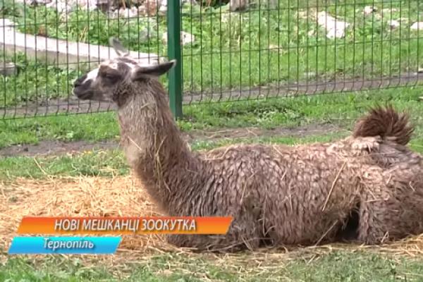 Нові тваринки з'явились у зоокутку, що в тернопільському парку «Топільче»
