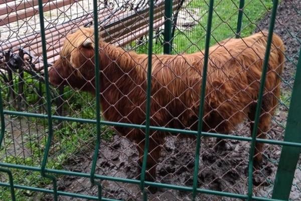 До тернопільського зоокутка в гідропарку «Топільче» привезли сім нових тварин