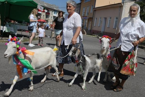 У містечку Козова на Тернопільщині організували міні-парад для найгарніших кіз