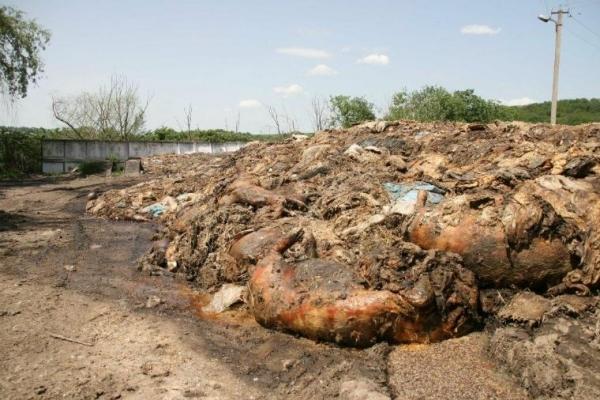 Звалище з рештками тварин поблизу Тернополя ліквідують за 2 мільйони гривень