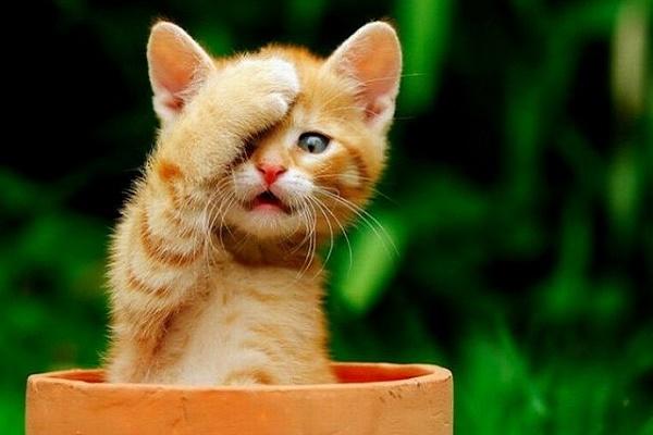 Тернополянин жорстоко познущався над кошеням (Відео)
