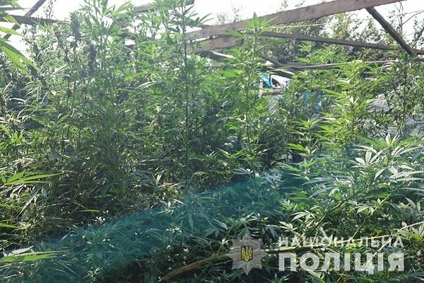 Мешканець Тернопільщини засадив свою теплицю коноплями
