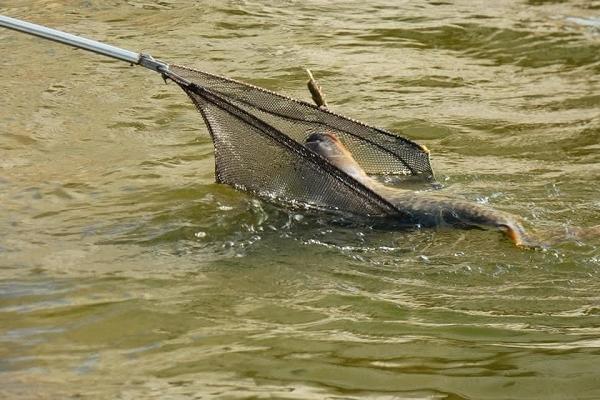 На Лановеччині в Горині спіймали велику щуку (Фото)