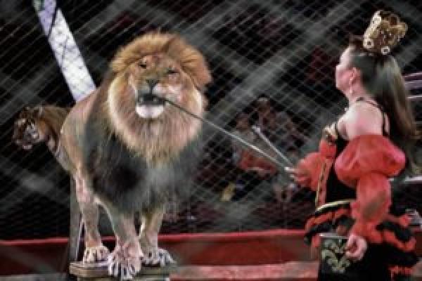 У Тернополі заборонили пересувні цирки, але не всі