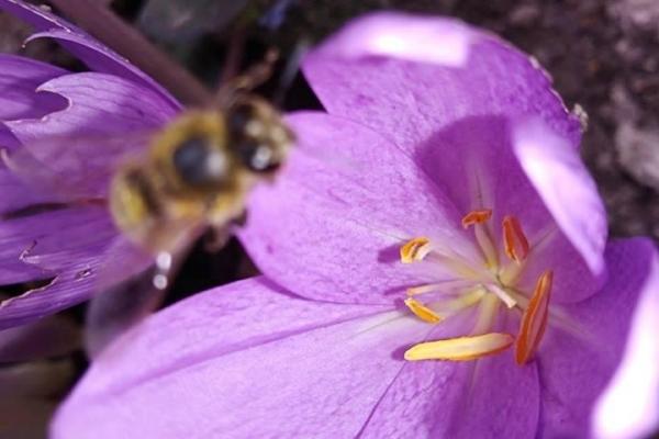 У Кременці розквітла небезпечна квітка (Фото)
