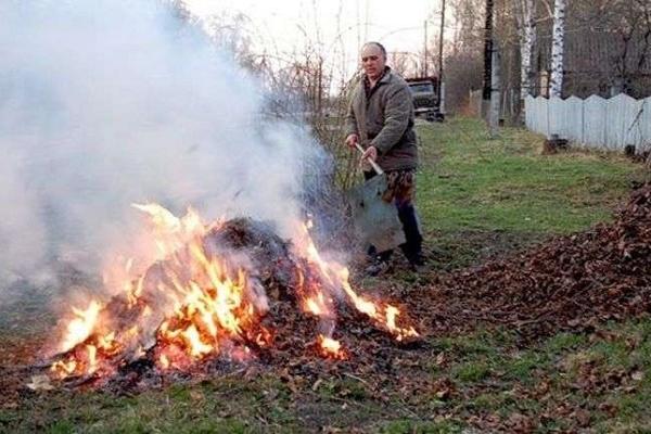 Тернополянам нагадують, скільки штрафу вони можуть сплатити за спалювання сухого листя