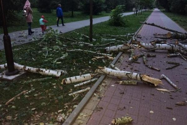 У тернопільському парку на пішохідну алею впало величезне дерево (Фото)