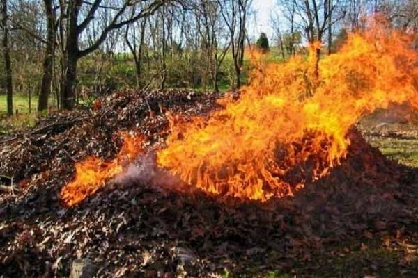 Спалювання листя та бадилля – загрожує здоров'ю людей