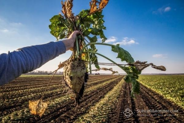 Аграрна Тернопільщина: Заводський гудок у Хоросткові дав старт «солодким жнивам» в області