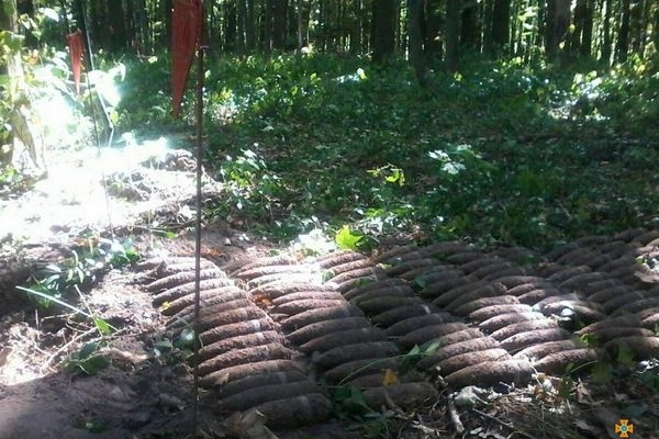 На Тернопільщині в лісосмузі виявлено 350 боєприпасів (Фото)