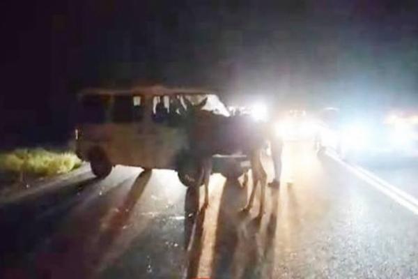 На Київщині лось, вибігши на трасу, став винуватцем ДТП