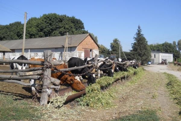 Ідентифікація сільськогосподарських тварин обов'язкова і дешевша
