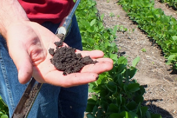 Рівень пестицидів у нормі – висновок поліцейських щодо масового отруєння людей у Борщівському районі