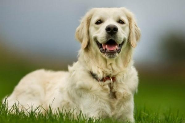 У центрі Тернополя розкидали небезпечну як для собак, так і для людей отруту?
