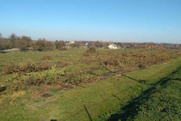 Представники Почаївської лаври знищили молодий сад