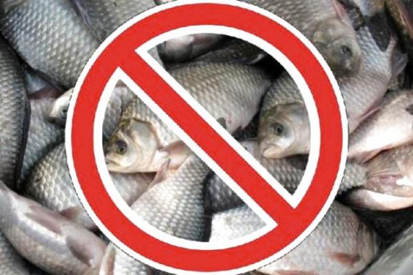 Де на Тернопільщині не можна ловити рибу з 1-го листопада