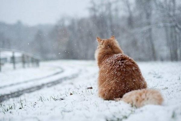 Перший сніг у Тернополі прогнозують уже цієї неділі (Відео)