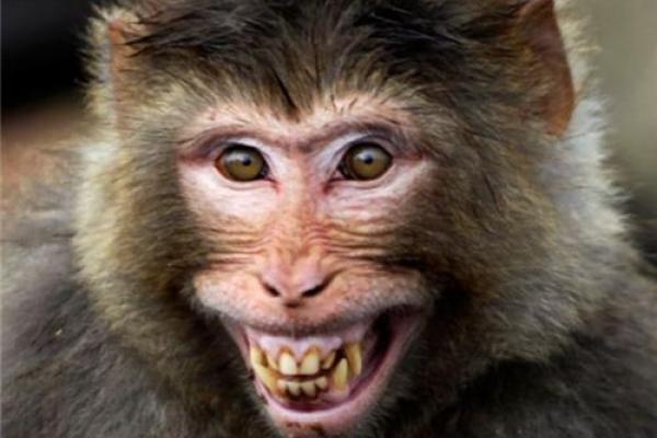 У київському метро з'явилася жива мавпа