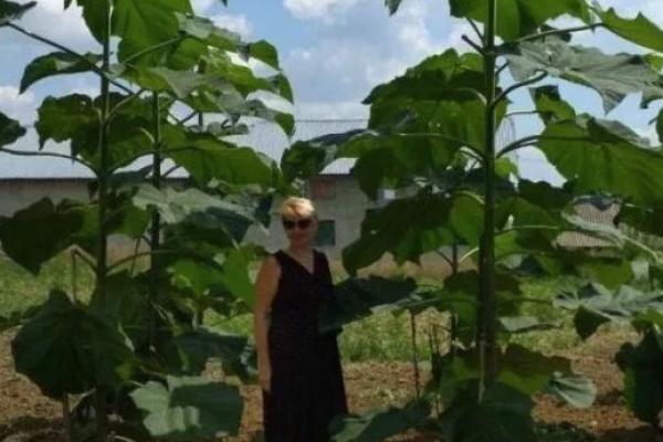На Тернопільщині створили першу в Україні енергетичну ферму
