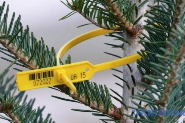 Перевірити легальність новорічної ялинки можна онлайн