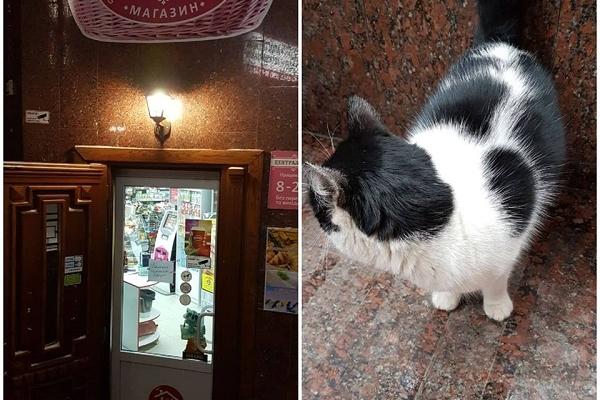 Як в одному з магазинів у центрі Тернополя гонили покупця через вуличного кота