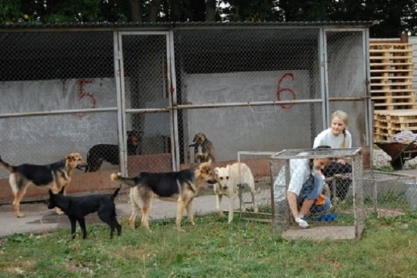 Роман Заставний: притулок для тварин у Дичкові реконструюють