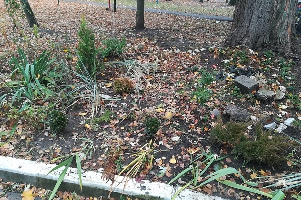 У Тернополі вандали понищили зелену зону та вкрали рослини (Фото)