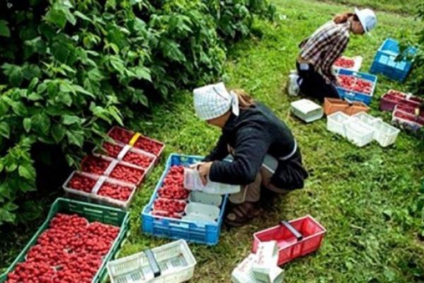 Польща підняла «мінімалку»: Скільки отримуватимуть українські заробітчани