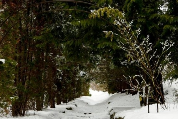 Зимові краєвиди Кременецького ботанічного саду (Відео)