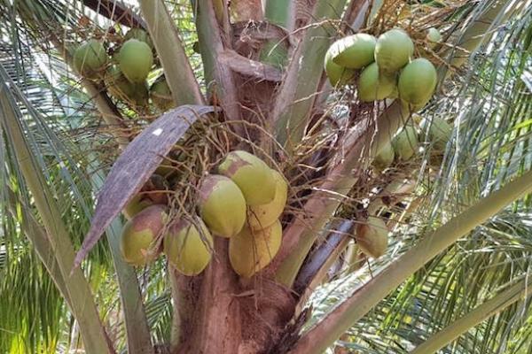 Із мандрівного записника: майже все про кокосовий рай (Фото)