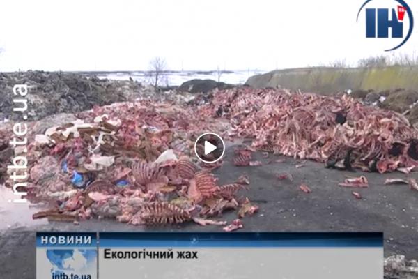 Неподалік Тернополя звалище тваринних рештків (Відео)
